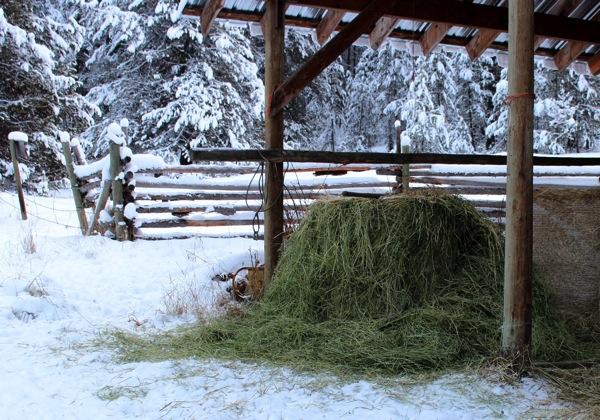 Deer like hay